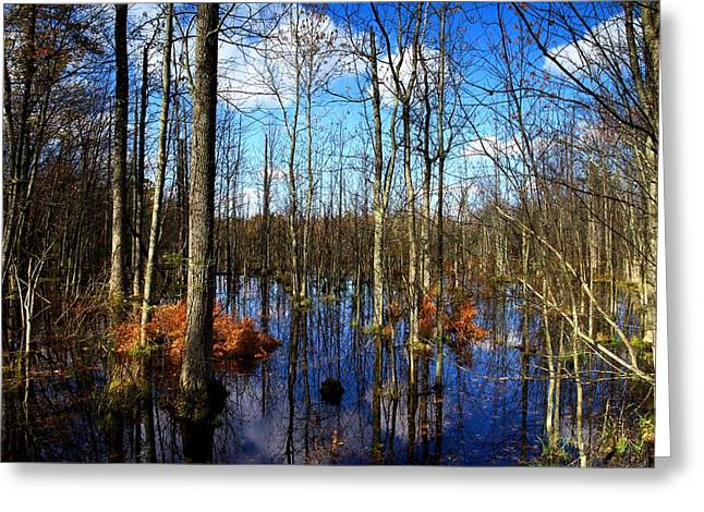 Forest In Colorful Fall Greeting Card