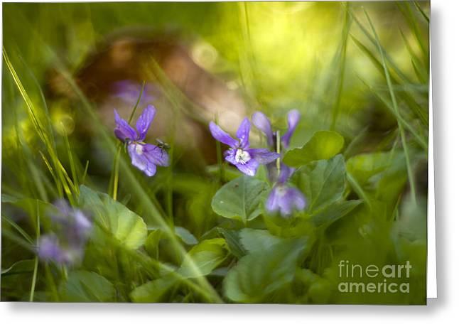 Forest Meadow Greeting Card by Angel  Tarantella