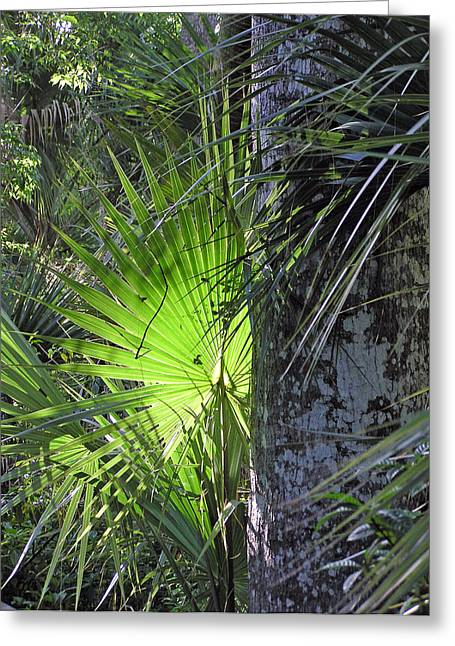 Greeting Card featuring the photograph Forest Palm by Lou Belcher