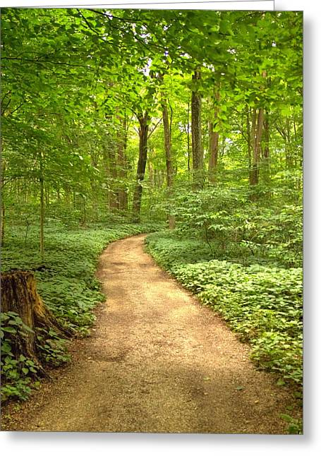 Greeting Card featuring the photograph Forest Path by Coby Cooper