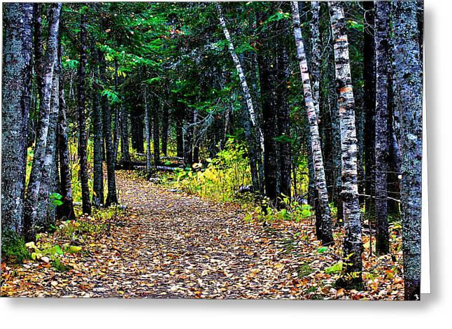 Forest Path In Autumn Greeting Card by Matthew Winn
