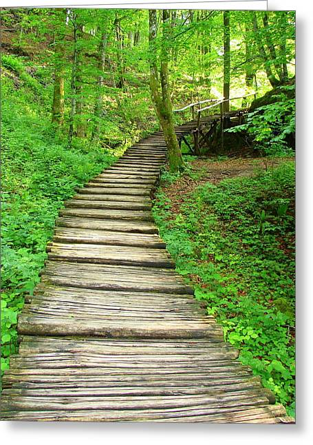 Greeting Card featuring the photograph Forest Path by Ramona Johnston