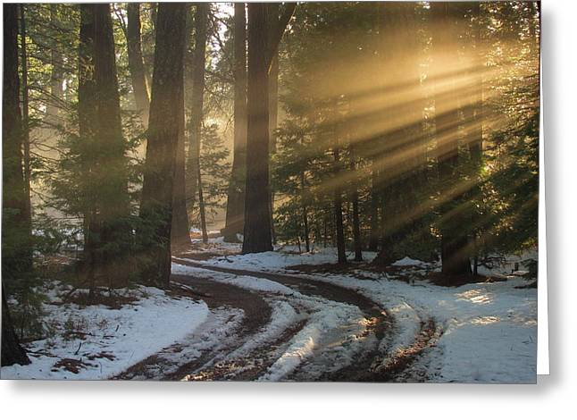 Forest Road Greeting Card by Irina Hays