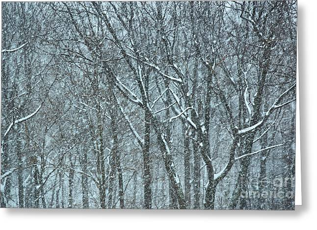 Forest Snowstorm Greeting Card by HD Connelly