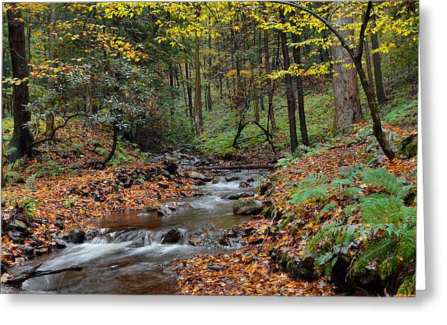 Forest Stream In Autumn Greeting Card by Stephen  Vecchiotti