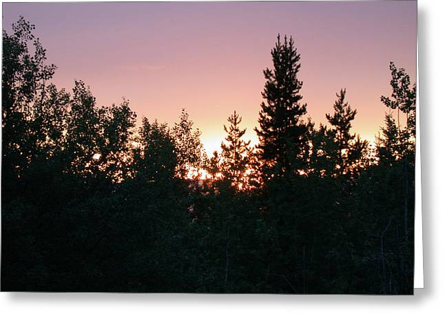 Forest Sunset Silhouette Greeting Card