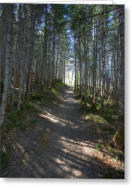 Forest Trail, Gros Morne National Park Greeting Card
