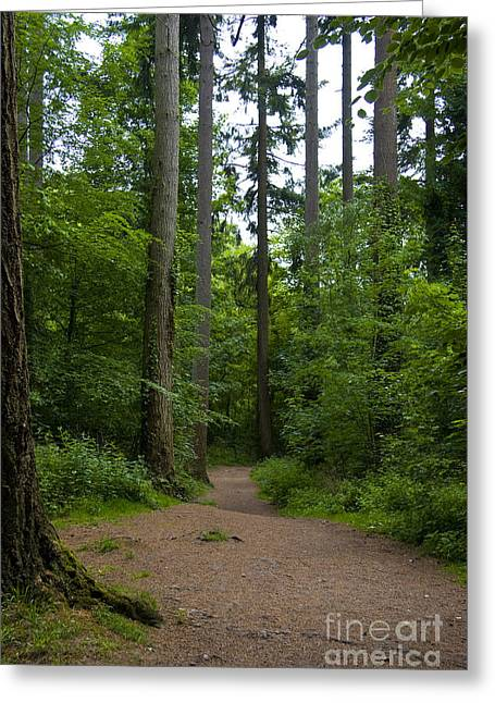 Forest Trail Greeting Card by Ron Telford