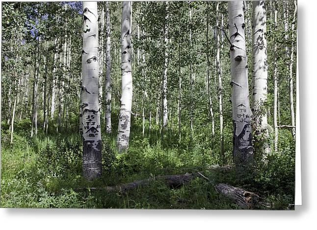 Forever Aspen Trees Greeting Card by Madeline Ellis