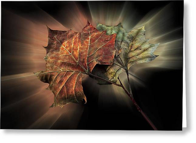 Forever Autumn Greeting Card by Debra and Dave Vanderlaan
