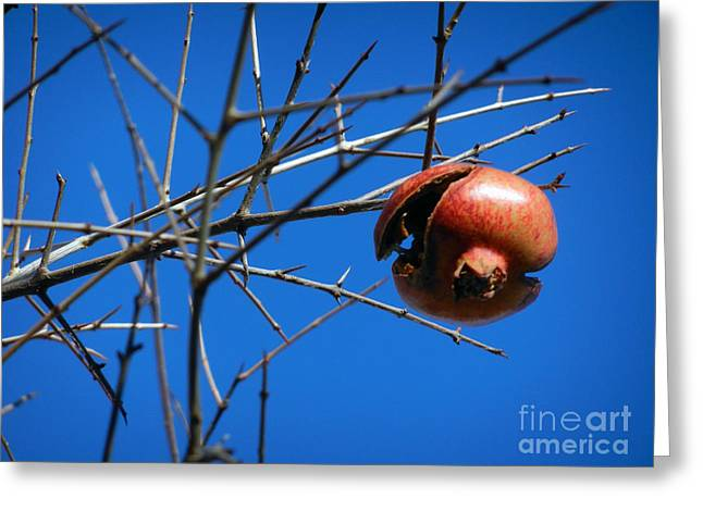 Greeting Card featuring the photograph Forgotten Pomegranate  by Alexandra Jordankova