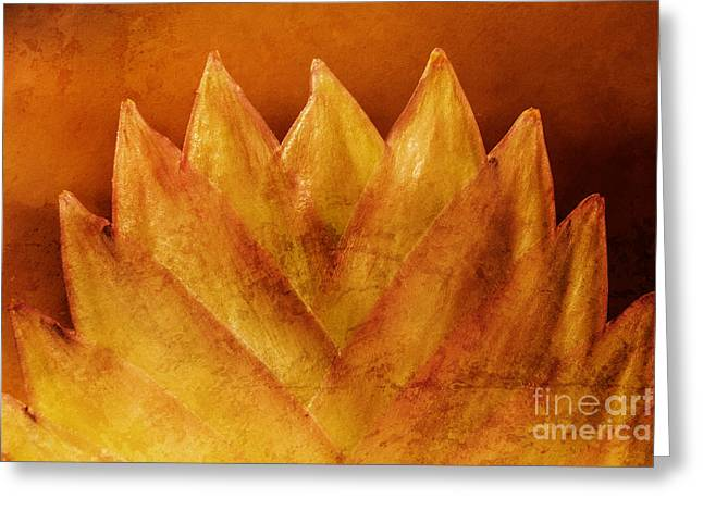 Forms Of Nature Greeting Card by Lutz Baar