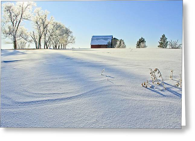 Fort Collins Colorado In January Greeting Card by James Steele