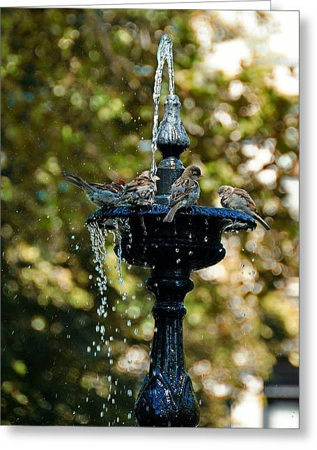Fountain Bathing Greeting Card by JAMART Photography