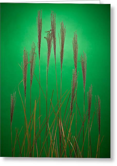 Fountain Grass In Green Greeting Card by Steve Gadomski