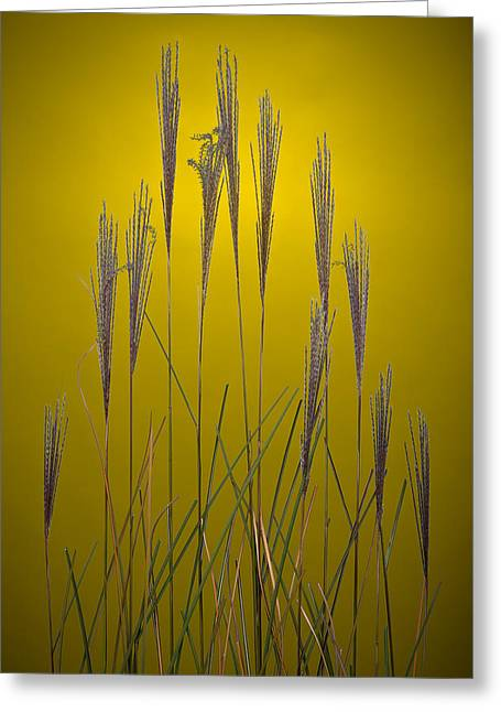 Fountain Grass In Yellow Greeting Card by Steve Gadomski
