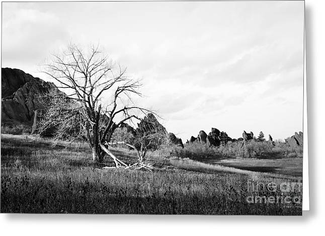 Greeting Card featuring the photograph Fountain Valley In Black And White by Cheryl McClure