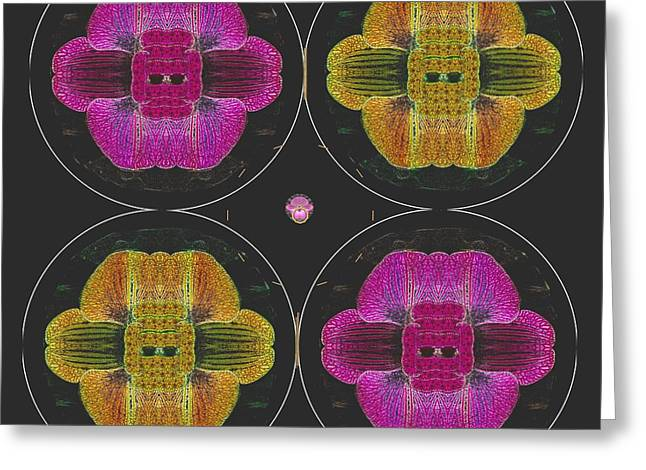 Four Bits Orchid And Owls Greeting Card
