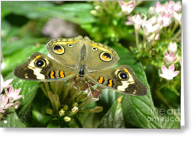 Four Eyes Greeting Card by Bella Photography