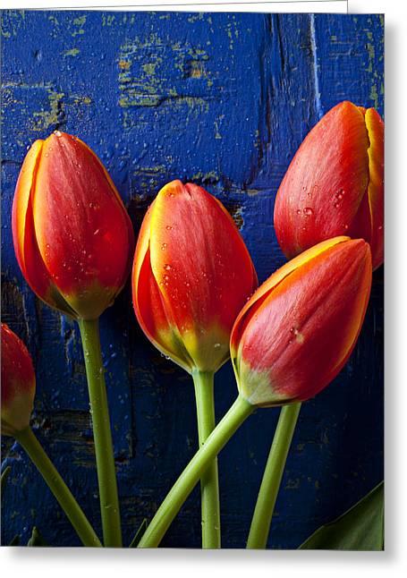 Four Orange Tulips Greeting Card by Garry Gay