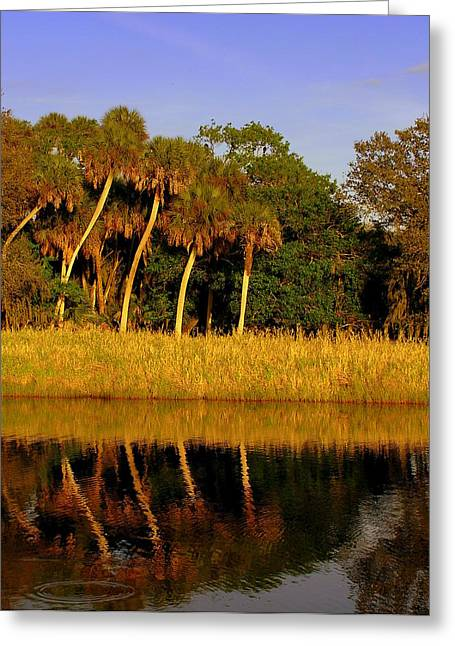 Four Palms Reflecting In Myakka Lake Greeting Card