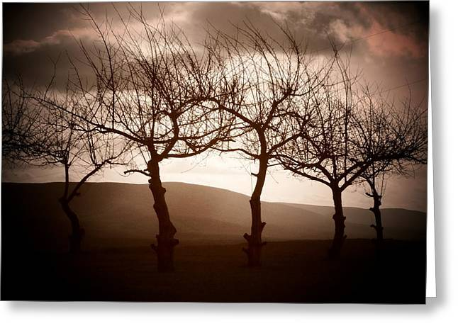 Four Trees Greeting Card by Michael L Kimble