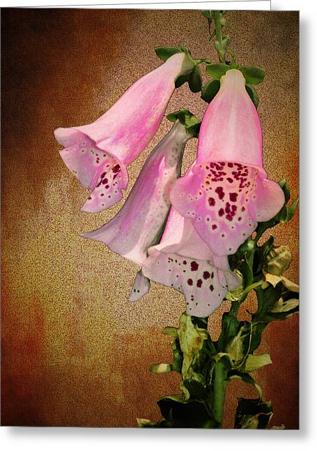 Fox Glove Grunge Greeting Card by Bill Cannon