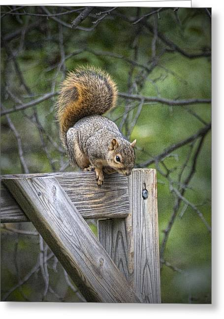 Fox Squirrel On A Fence Greeting Card by Randall Nyhof