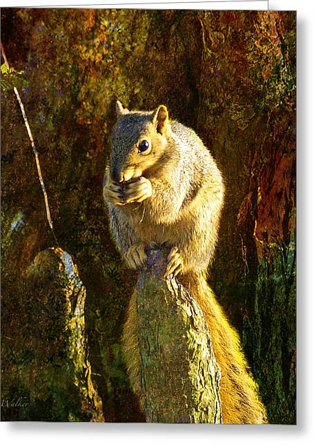 Fox Squirrel Sitting On Cypress Knee Greeting Card by J Larry Walker