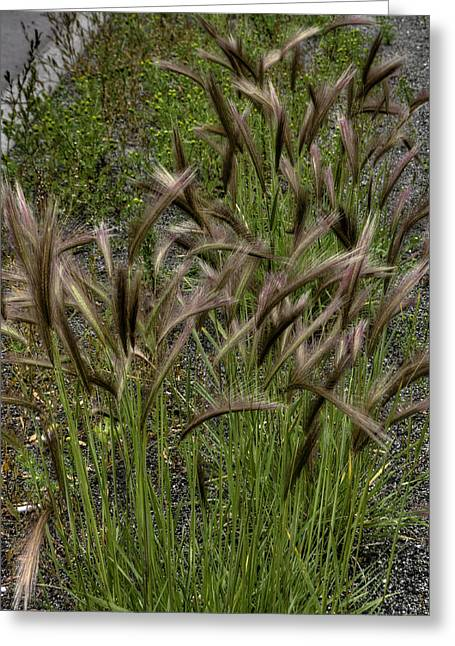 Fox Tail Grass Greeting Card by Grover Woessner