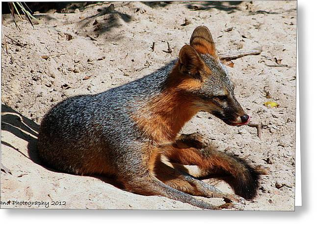 Greeting Card featuring the photograph Foxie by Debra Forand