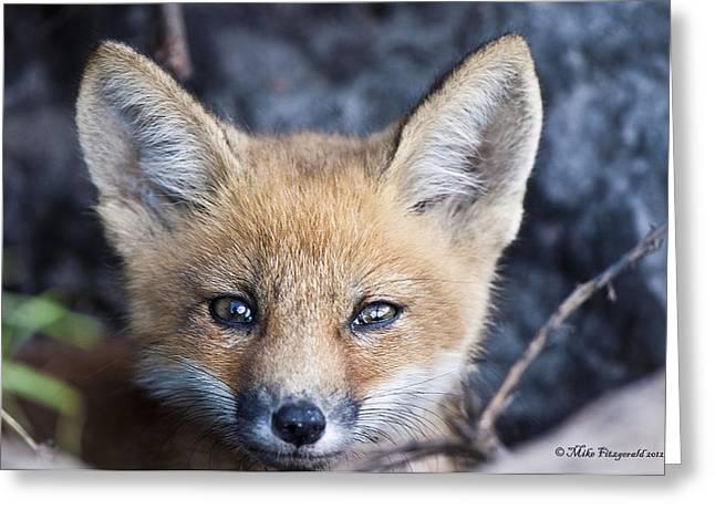 Foxy Cute Greeting Card
