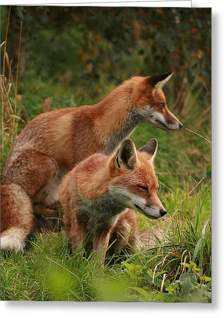 Foxy Pair Greeting Card
