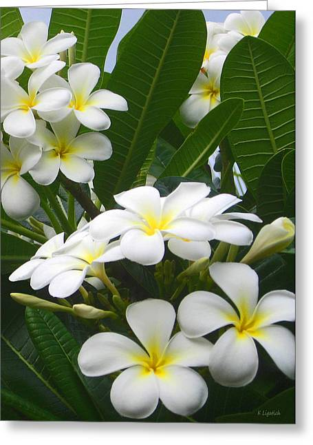 Greeting Card featuring the photograph Fragrant White Plumeria by Kerri Ligatich
