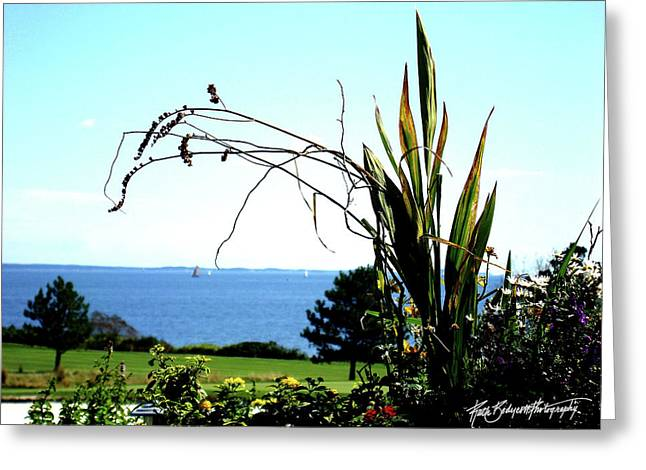 Framing The Bay Greeting Card by Ruth Bodycott
