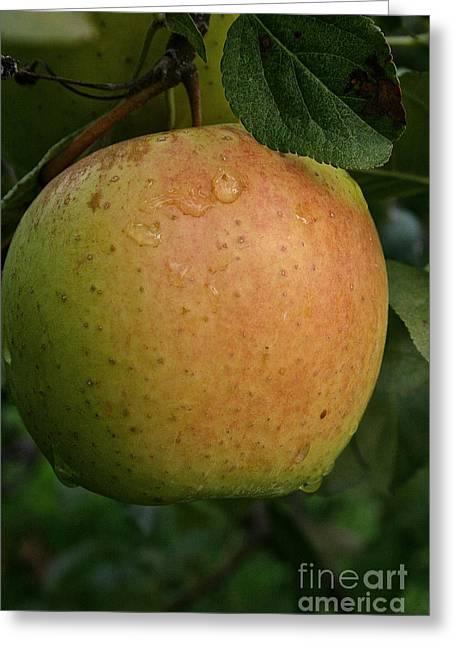 Fresh Apple Greeting Card by Susan Herber
