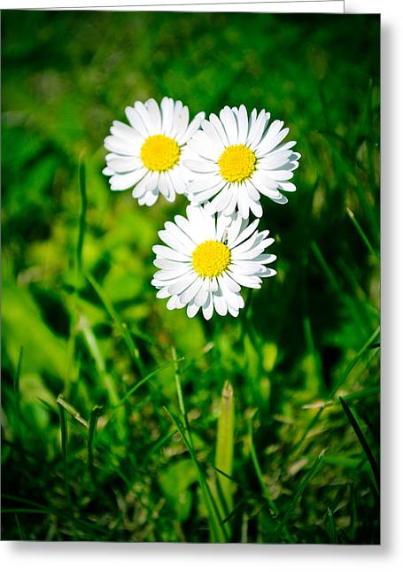 Friendly Daisy Greeting Card by Ruth MacLeod