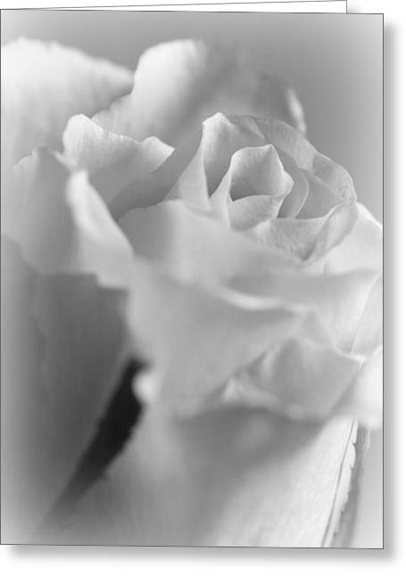 Friendship Rose In Black And White Greeting Card by Mark J Seefeldt