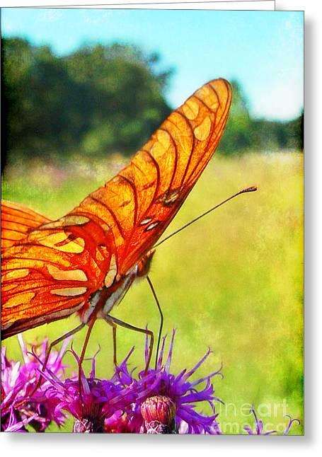 Fritillary On Ironweed Greeting Card by Judi Bagwell