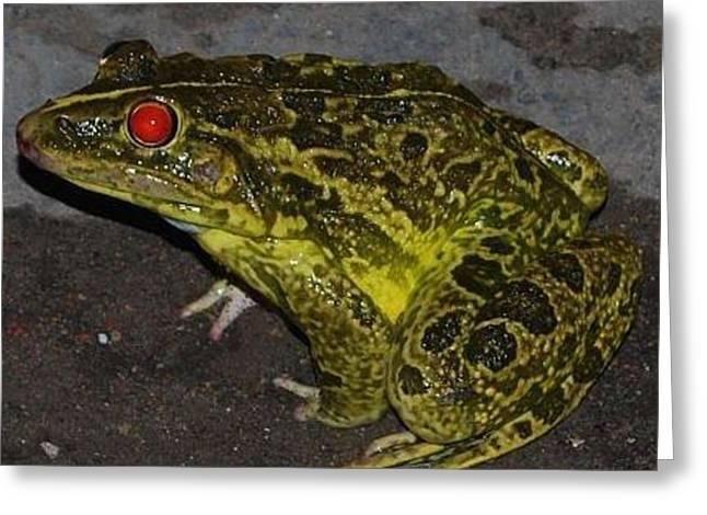 Frog Greeting Card by Chirag Arts