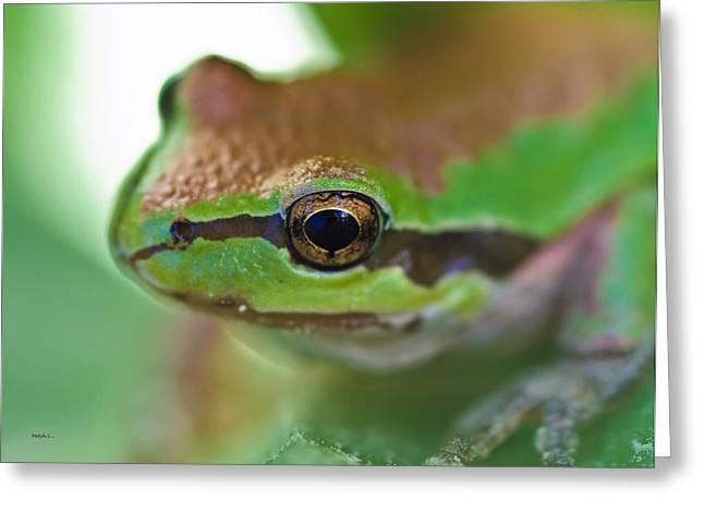 Frog Close Up 1 Greeting Card
