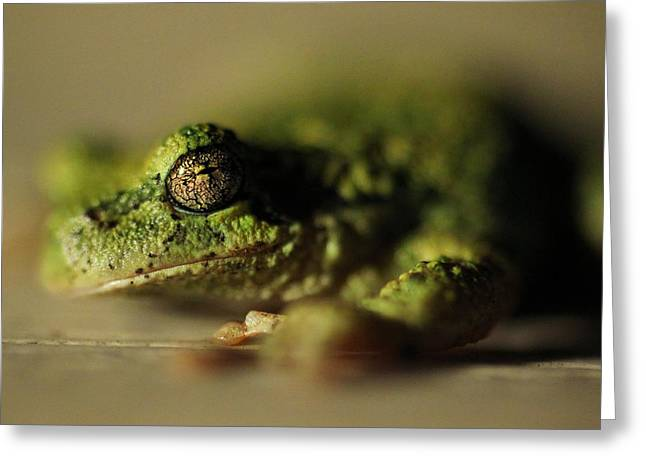 Frog Eyes Greeting Card by Leigh Edwards