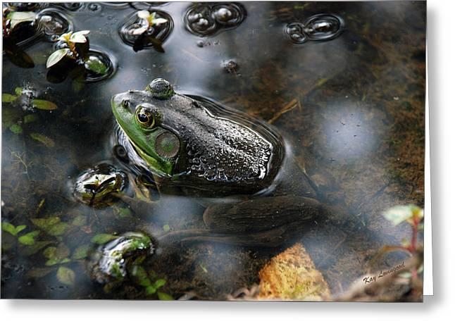 Frog In The Millpond Greeting Card