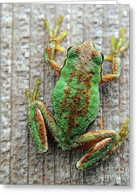 Frog On Wall Greeting Card by Billie-Jo Miller