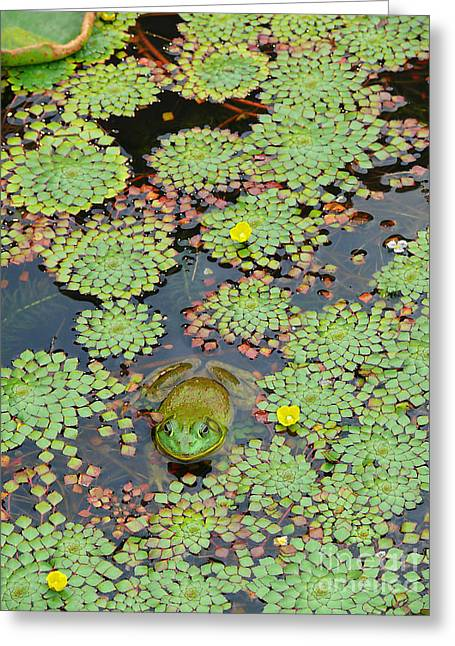 Greeting Card featuring the photograph Frog Pond by Jeanne  Woods