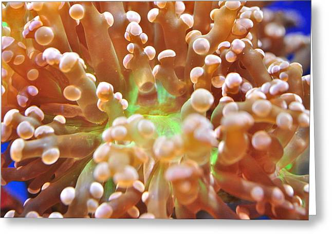 Greeting Card featuring the photograph Frogspawn by Puzzles Shum