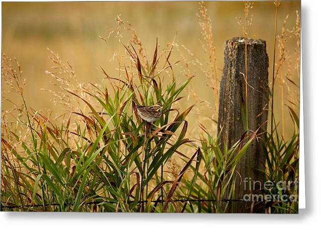 Frolicking In The Grass Greeting Card by Beve Brown-Clark Photography