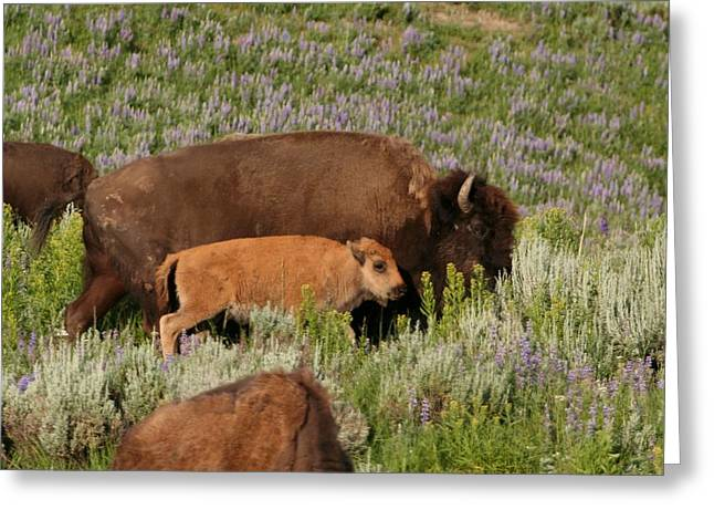 Frontier Family Greeting Card by Bob Bahlmann