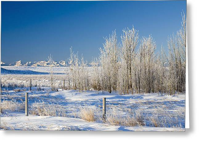 Frost-covered Trees In Snowy Field Greeting Card by Michael Interisano
