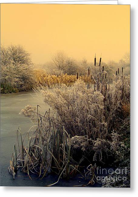 Greeting Card featuring the photograph Frost by Linsey Williams